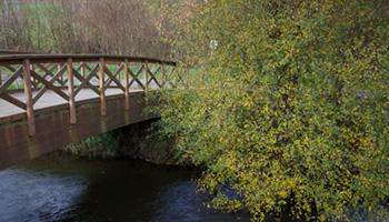 Detalle paseo del río Anllóns