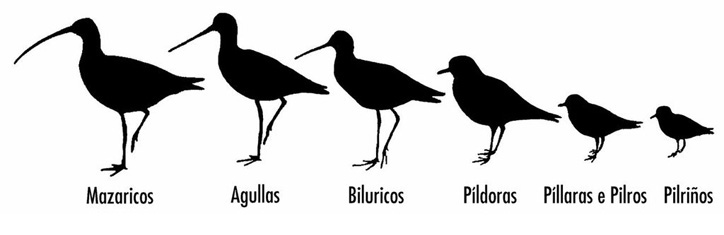 Silueta limícolas en Baldaio, espacio natural protegido - Baía Ediciones, A Coruña
