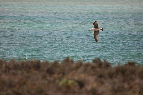 Aves en la marisma de Baldaio